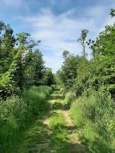 Sensorische wandelingen o.l.v. Cassandra Feith @ Koninklijke Landgoederen De Horsten